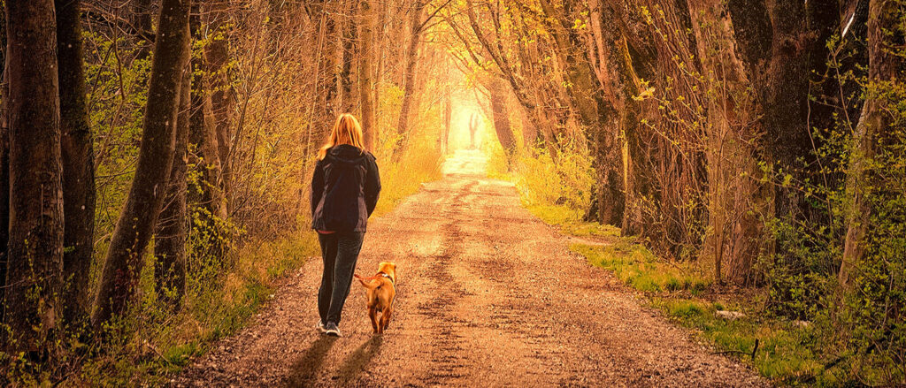 A woman walking her dog through a row of tall trees